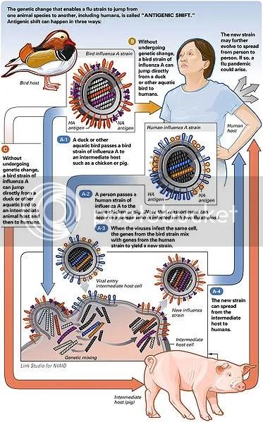 H1N1 portrait