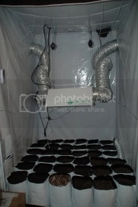 My 4x4 Grow Tent set up!!!