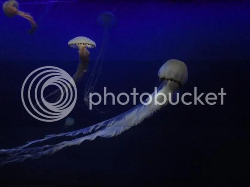 Box jellyfishes in S.E.A. Aquarium Sentosa
