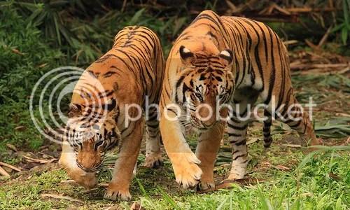 Taman Safari, Bogor, Indonesia