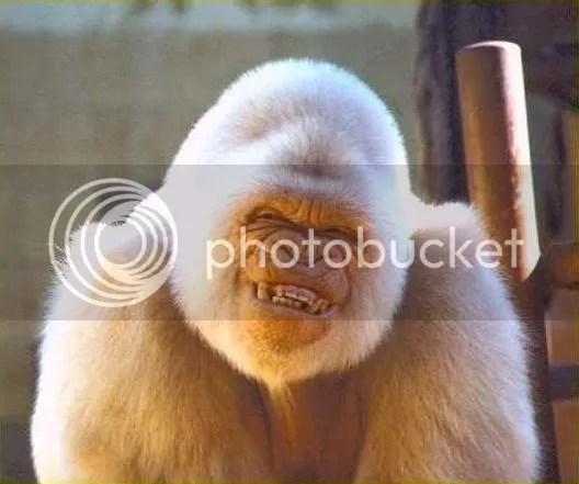 Stupid Ape