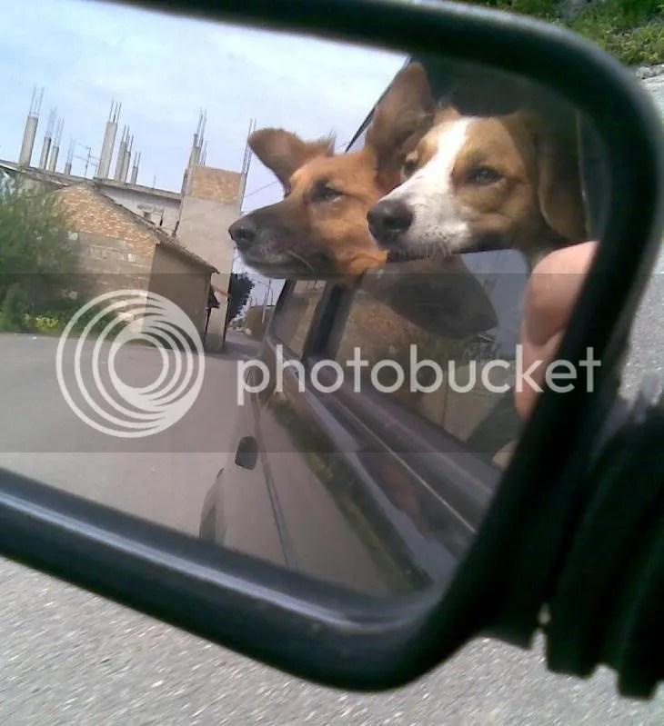 Bibo e Pappiralfi, cani al finestrino
