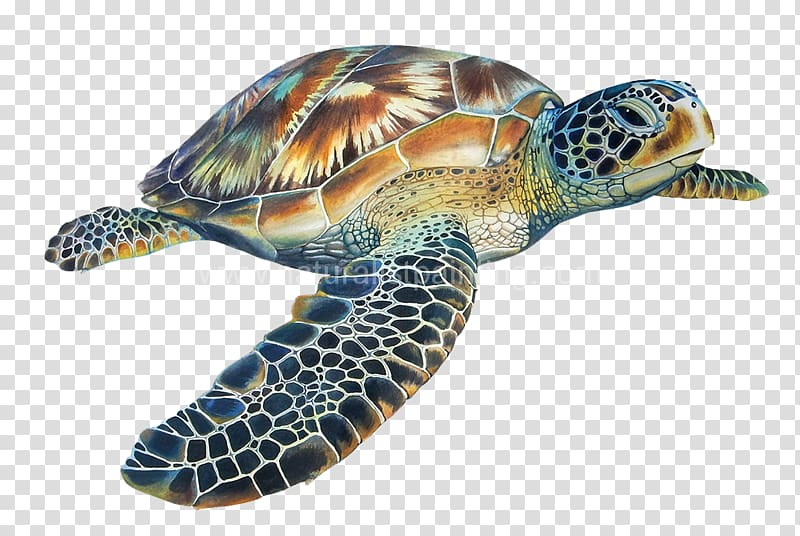 Sea White Background Turtle Without Outline Green