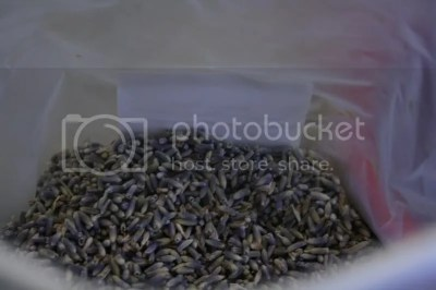 Dried Culinary Lavender Grown by Hill Country Lavender