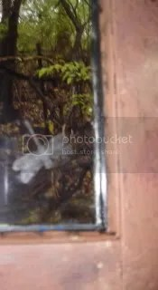 Blurry dragonfly picture