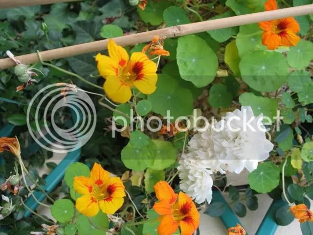 Terrazza in settembreFoto  Forum di Giardinaggioit