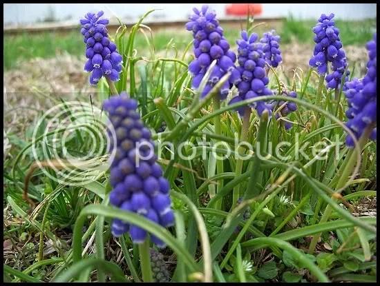 Little flowers...