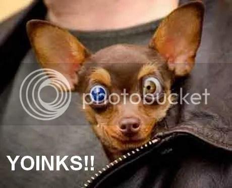 Que hago si mi perro tiene fiebre-micompi.com