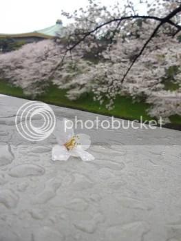 photo photokano_02_01_blog_import_529f130c7535a_zpsb519d288.jpg