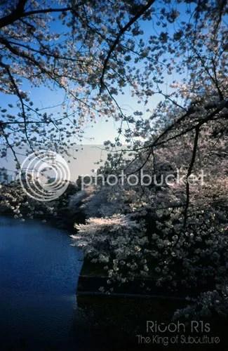 photo photokano_02_04_blog_import_529ef7f06120e_zpsfdb7e508.jpg
