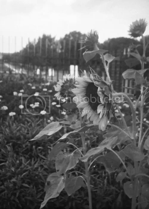 photo 20110621_16yearago_bwfilm_03_blog_import_529efebbeeba6_zpsb6cfb34b.jpg
