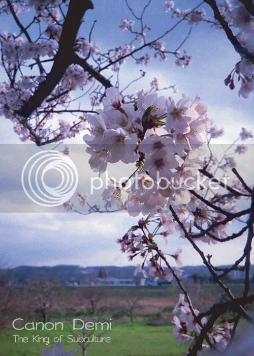 photo cheki_tsume_07_blog_import_529eecf504b96_zpsc0602ff6.jpg