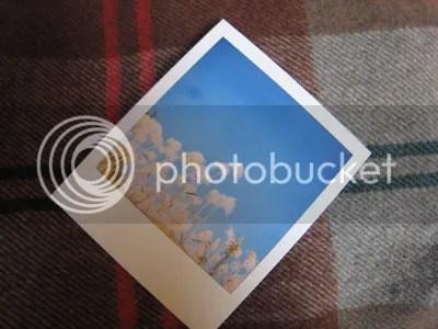 photo polaroid_landcamera_onestep_02_05_blog_import_529f1b797ed2f_zps563db501.jpg