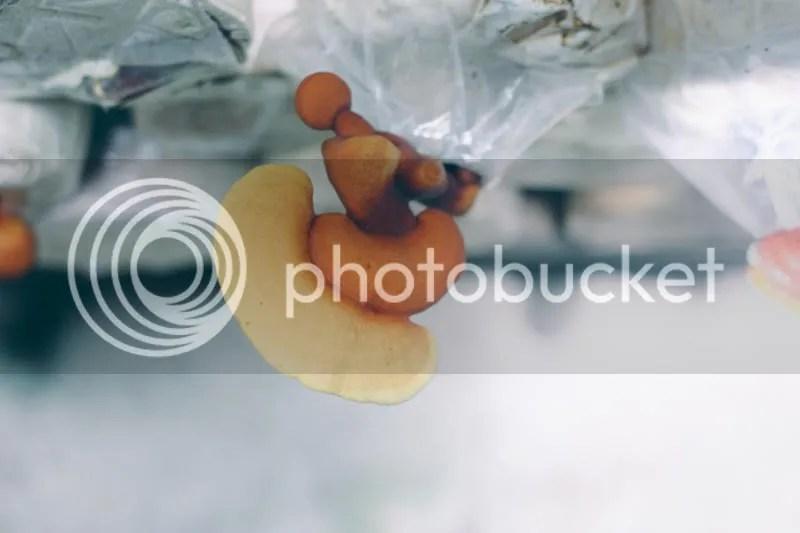 photo IMG_0351-1.jpg
