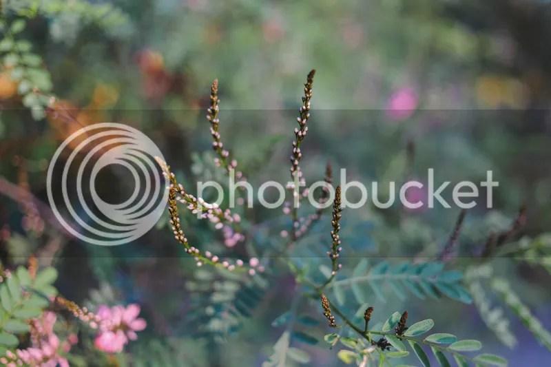 photo IMG_1858.jpg
