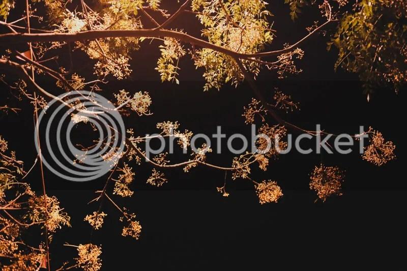 photo IMG_3075.jpg