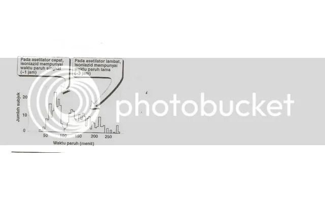 Gambar distribusi bimodal waktu paruh isoniazid yang disebabkan oleh asetilasi obat cepat dan lambat