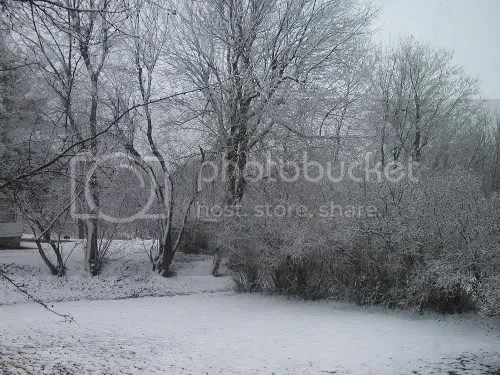 Izz's Sugar Snow