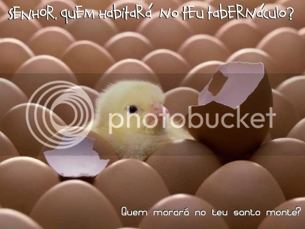quemhabitar-1.jpg picture by ysticoelho