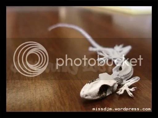 Small lizard
