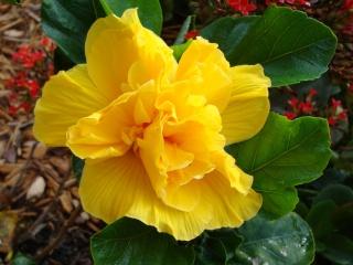 le pouvoir des fleurs a chaque couleur un message decouvrez le langage des fleurs limonasblog. Black Bedroom Furniture Sets. Home Design Ideas