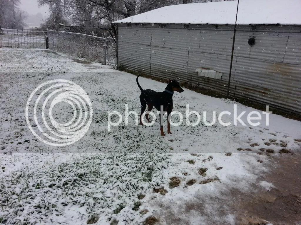 abominable snowdog