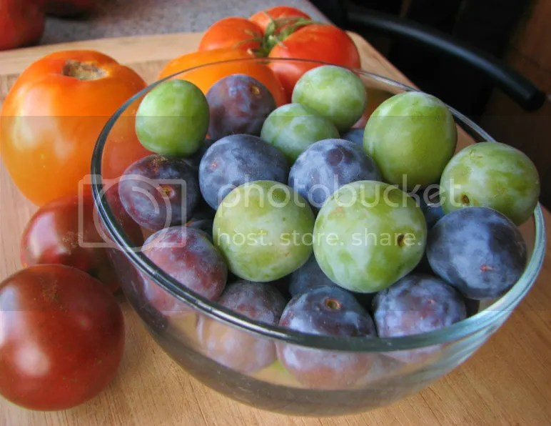 Greengages and Italians