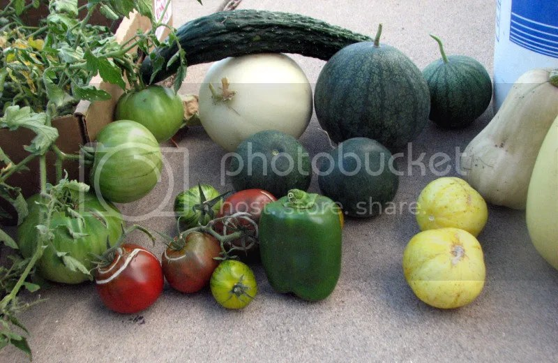 A Motley Crew of Summer Vegetables