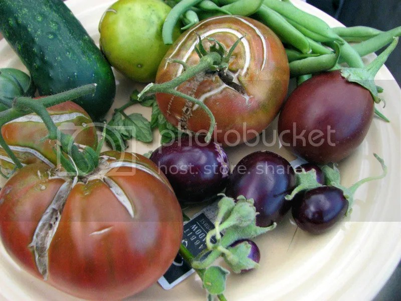 Vegetable Harvest Plate