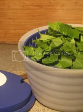 Spinach in Salad Spinner