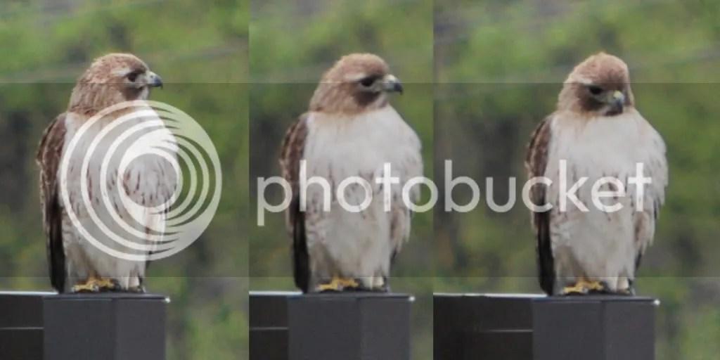 3 shots of the Chick-fil-A Bird...