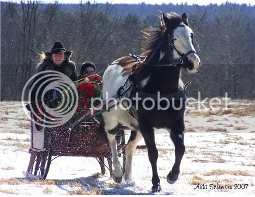 one horse open sleigh photo: One horse open sleigh SleddingC4.jpg