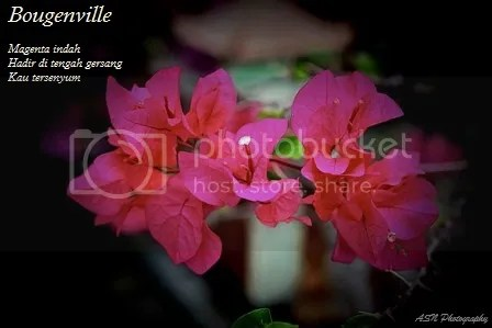 photo IMG_7795a1 Small_zpsq2kdkuap.jpg