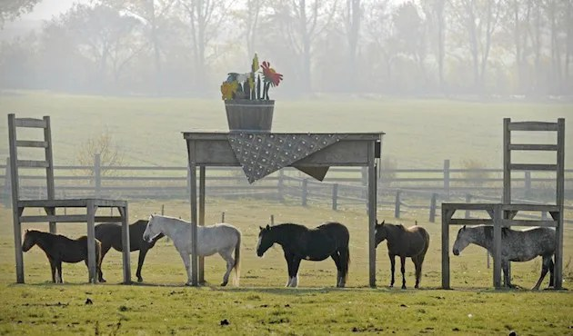 photo Giant-Table-and-Chairs-as-an-Unconventional-Horse-Shelter-1_zps0acb9ec2.jpg