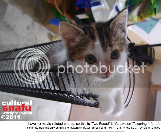 Vankleek Hill cat