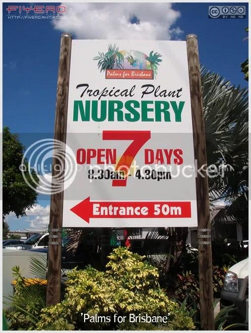Palms for Brisbane Nursery, ร้านขายต้นไม้ต่างประเทศ, ปรง, ปาล์ม, ไม้แปลก, ไม้หายาก, ต้นไม้, ดอกไม้, aKitia.Com