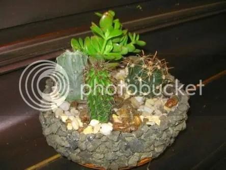 Cactus & Succulent Bargain At Wally World! Garden Helper