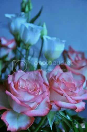 photo f2276cdb-509f-402d-820e-3530fe89e608_zpsef6eb30a.jpg