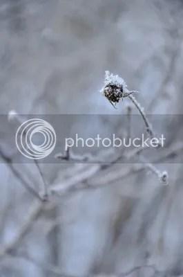 photo 9e261eda-190c-4593-bf8b-ad6282266713_zps05b42379.jpg