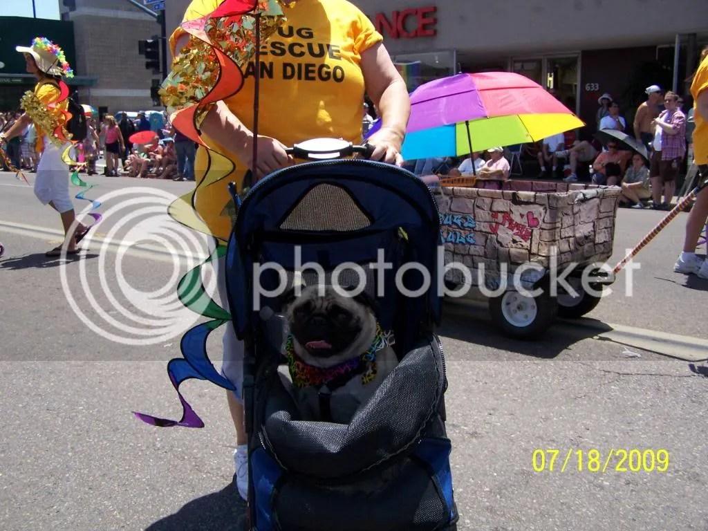 San Diego Pug Rescue