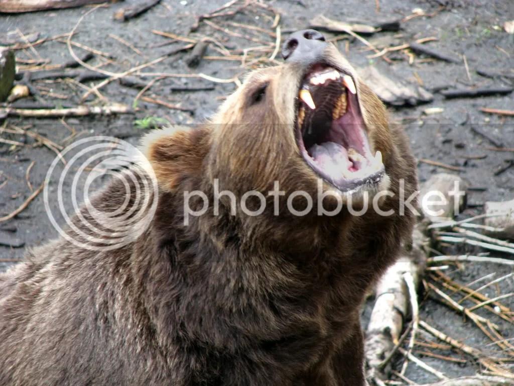 mouth with teeth photo: IMG_3565.jpg