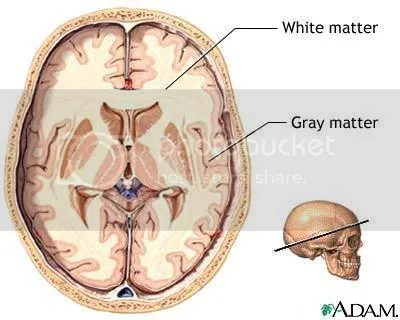 White matter and Grey matter of the brain