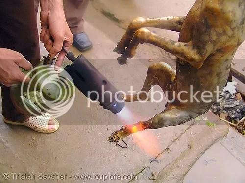 dog being prepared