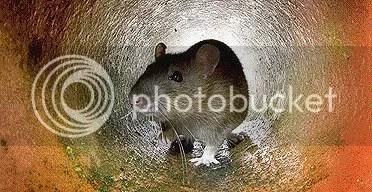 rat rat rat