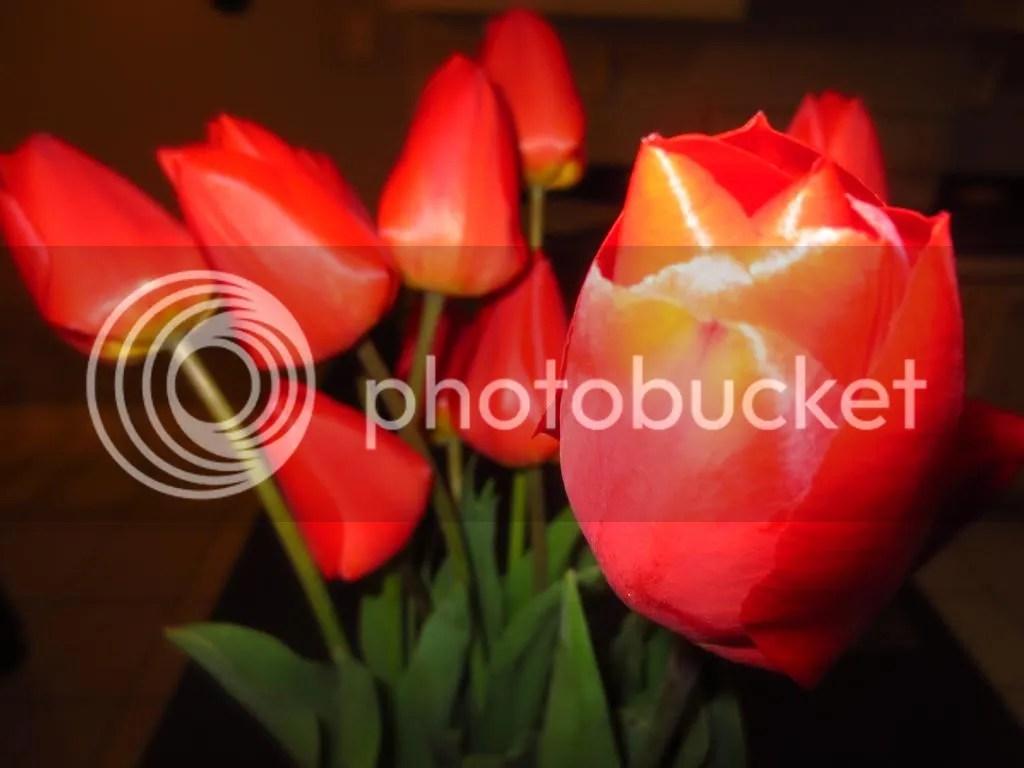 photo IMG_2078_zps4b6d652e.jpg