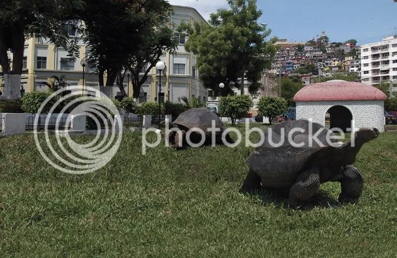 TORTUGAS EN EL MALEC photo guaya18_zps005d0bbd.png