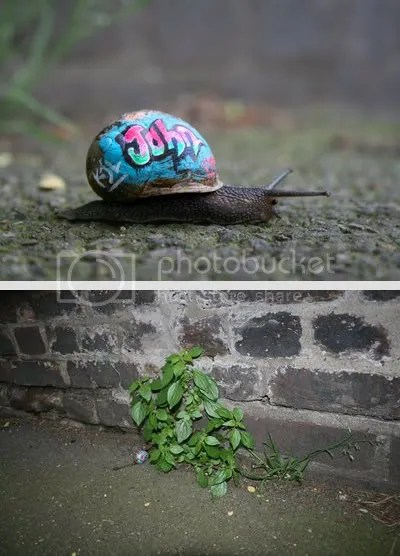 inner city snail