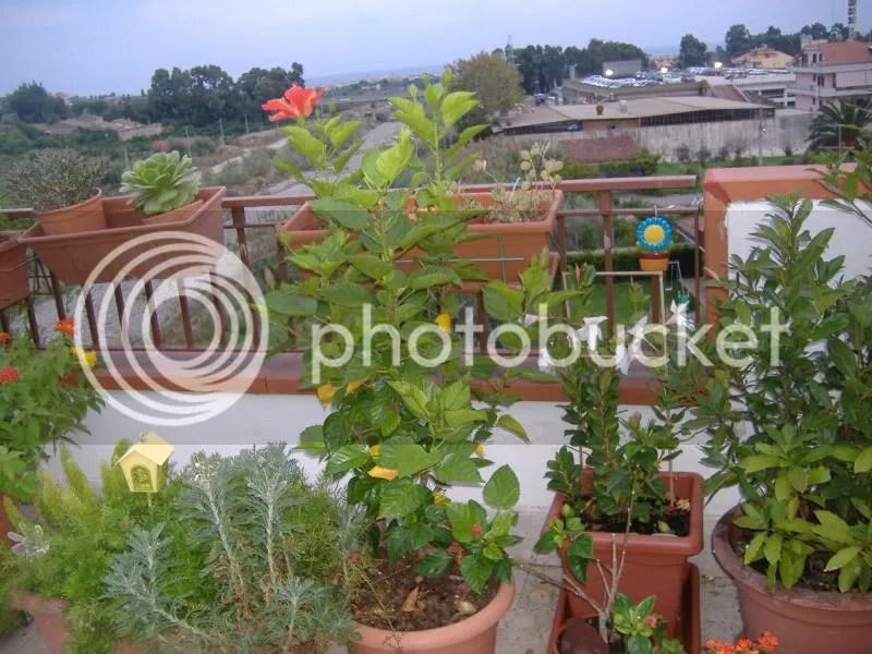 vi va di vedere la mia terrazza Prego  Forum Giardinaggio