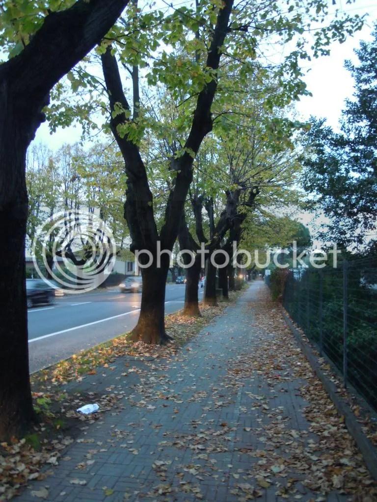 photo DSCN9006_zpse929de6a.jpg