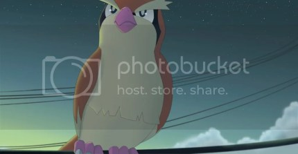photo pidgey_by_all0412-d8ted1h_zpsuoalfhyv.jpg